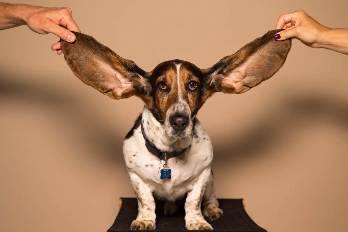 【 AirPods Studioの特徴 】左右の耳を検知